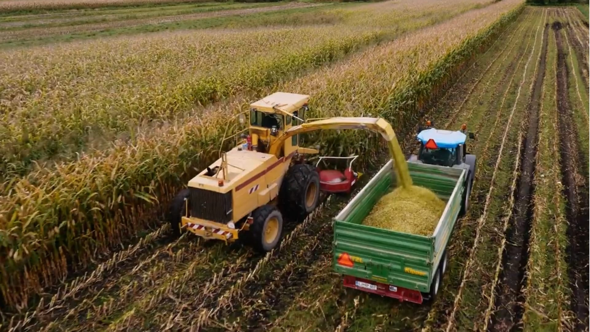 Large vehicles harvesting corn in a field