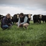 Two people crouched and examining green grass while cows stand in the background.