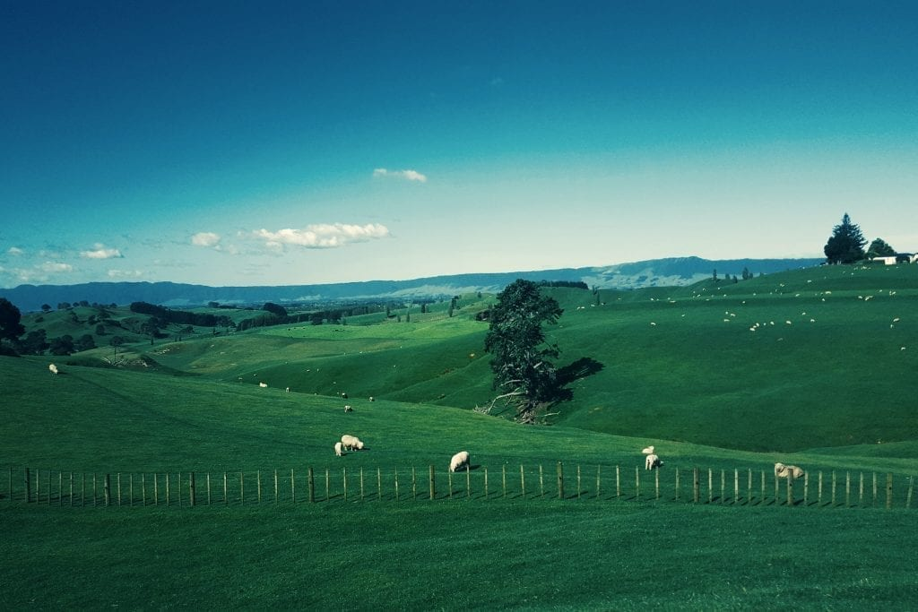 Wide landscape shot of rolling green hills and grazing sheep.