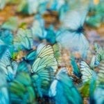 Lenovo brand image - dense image of blue and gold butterfly wings