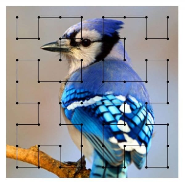 A diagram of a North American Blue Jay with an analytical mapping overlay, to indicate the simulation of mapping color frequencies to sound frequencies.