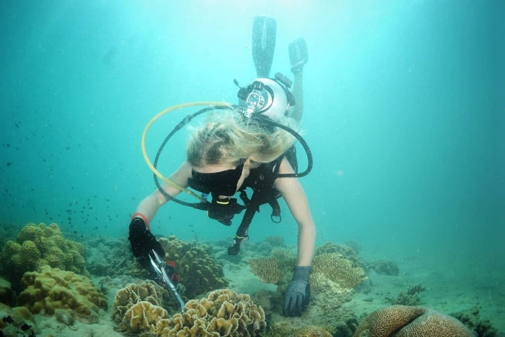 Reef rehabilitation and coral planting