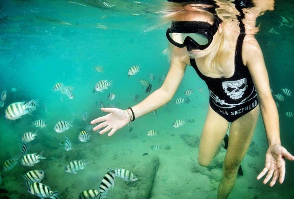 Marine biologist studying different fish species underwater